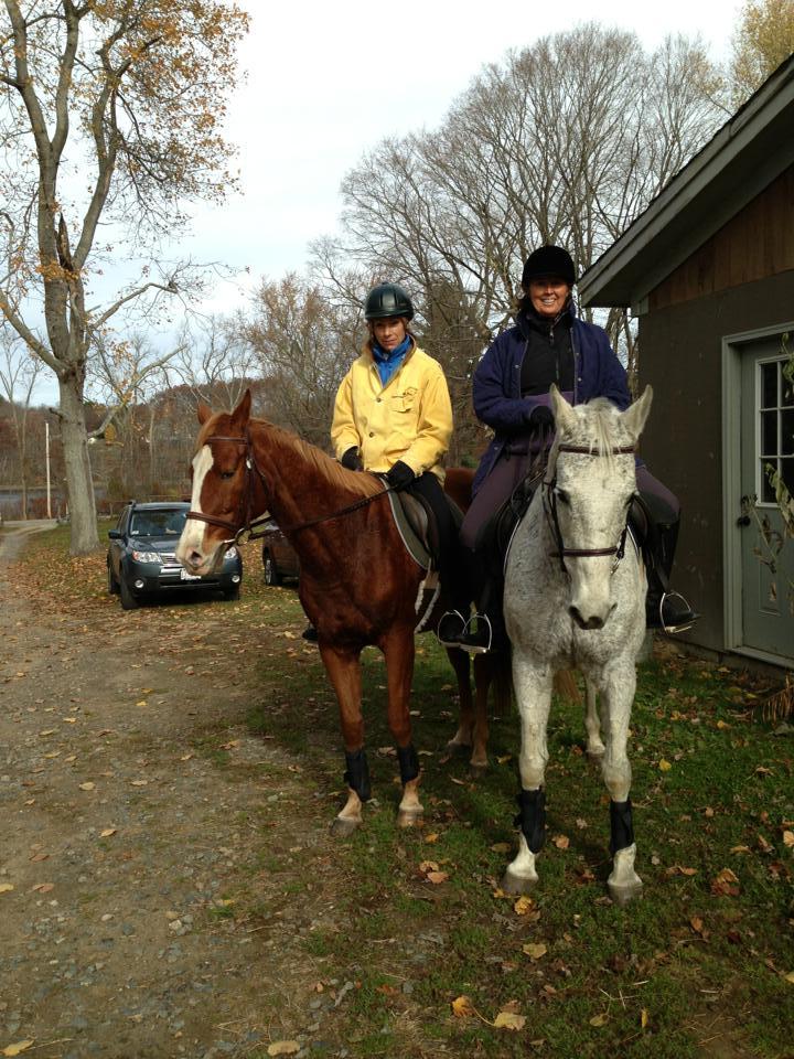 Horses Needing Homes In New England