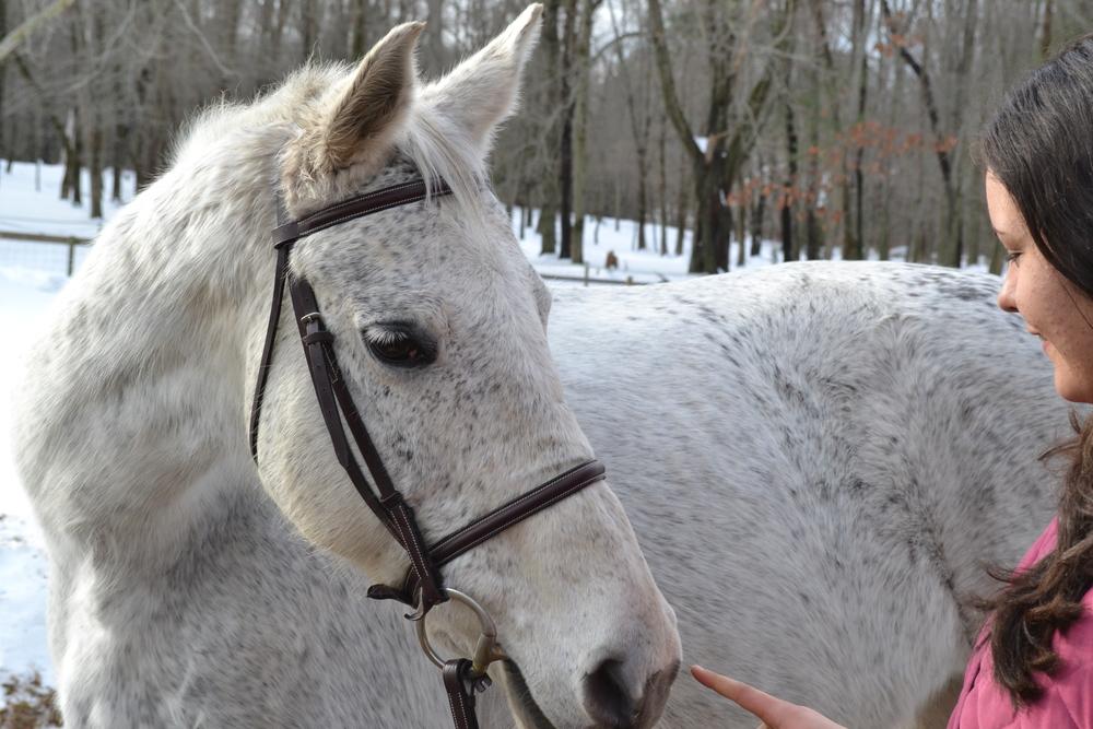 Sweetest horse
