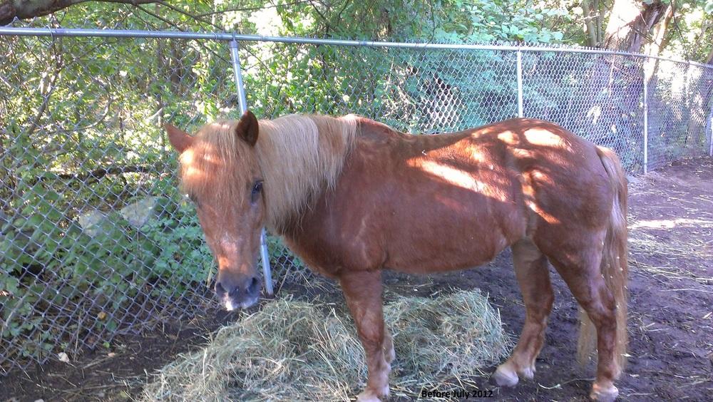 ginger spice pony.jpg