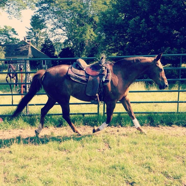 Exercising in round pen