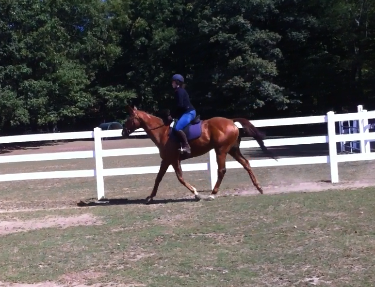 Nice walk, trot and canter gaits