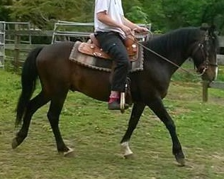Pete under saddle