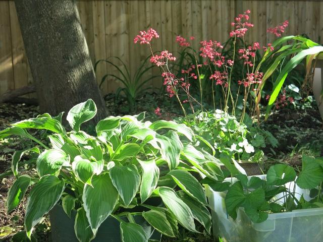 PlantsInWaiting