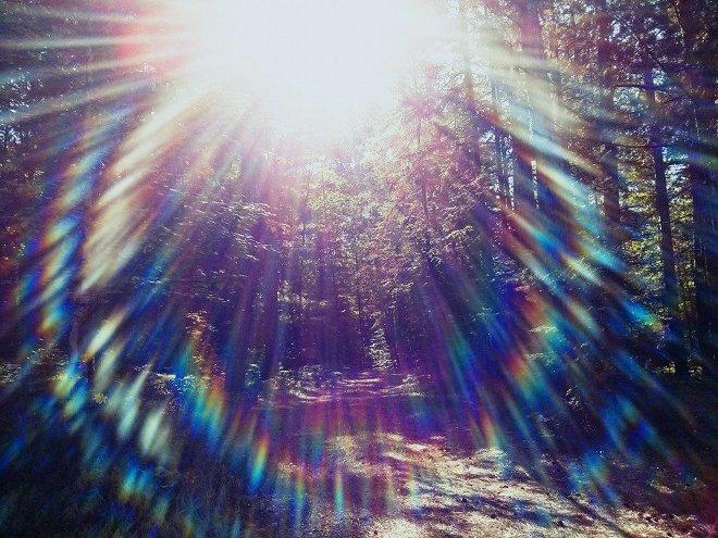 Sunbirst