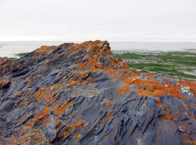 Orange Lichen on Rock 1