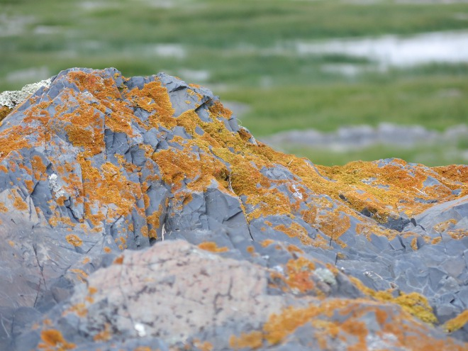 Orange Lichen on Rock 2