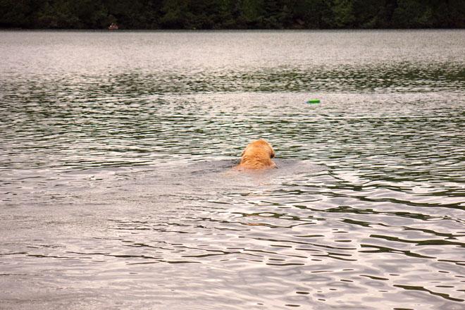 CassieSwimming