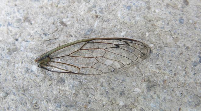 Broken wing.