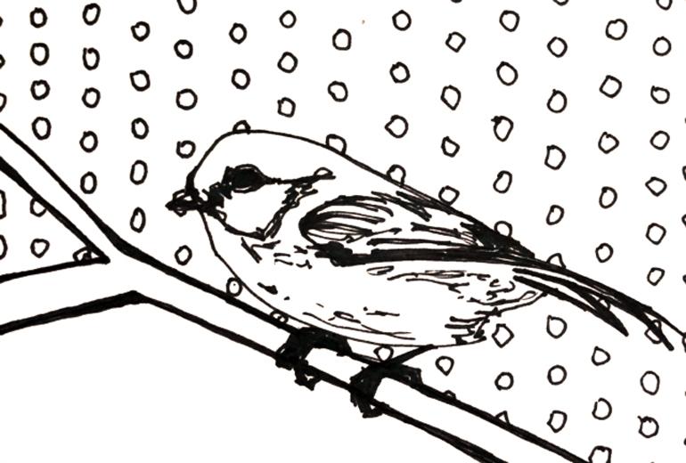 Bird1_770px.jpg