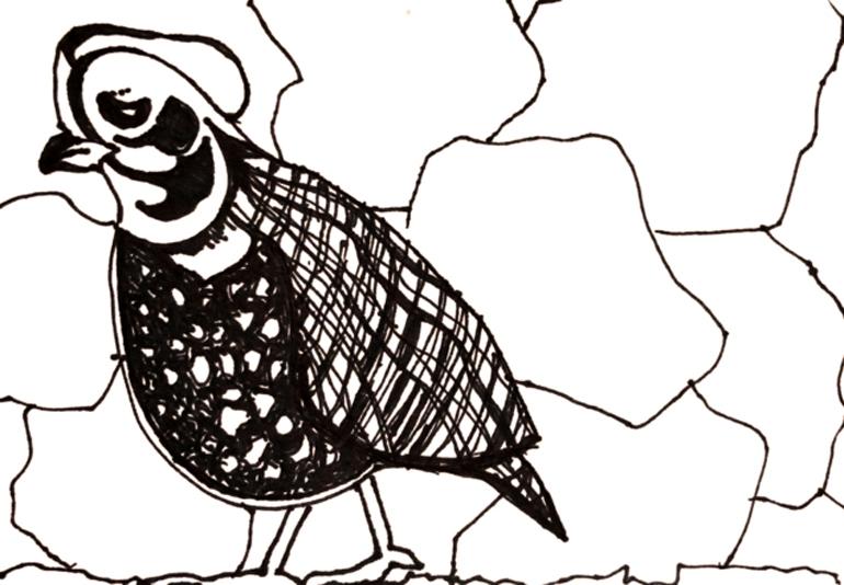 Bird2770px.jpg