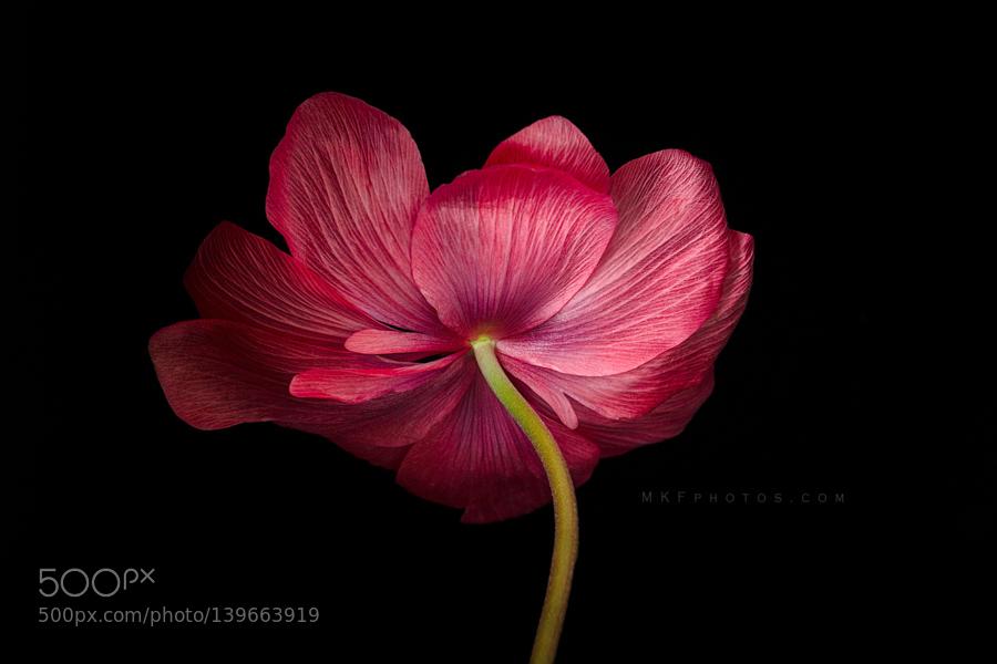 Reverse Anemone