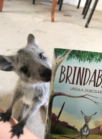Brindabella kangaroo 3.jpg