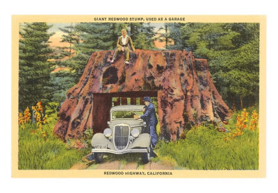 ca-00286-c_giant-redwood-stump-california-posters_01-jpg