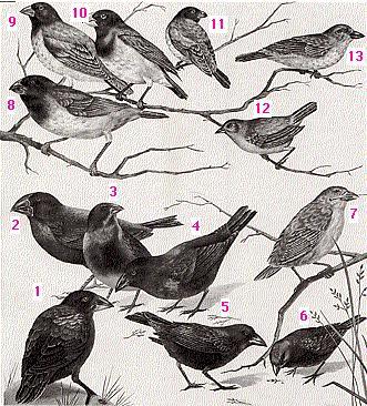 finches-1-jpg