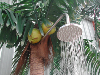 shower_palm_top-jpg