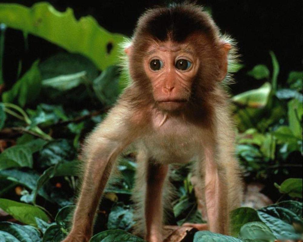 baby-monkey-1280-jpg