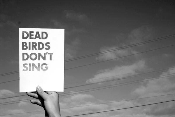 dead_birds_bw_1-png