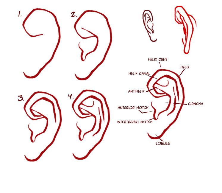 ear-jpg