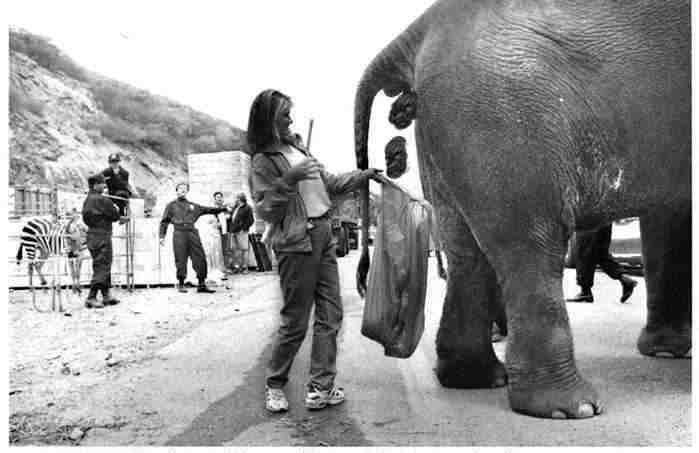 elephant-jpg