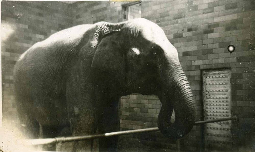 elephant_01-jpg