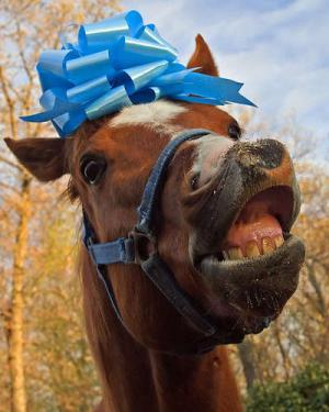 gift-horse2-jpg
