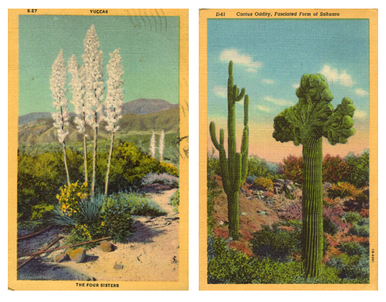 postcards_desert_pair-copy-729673-jpg
