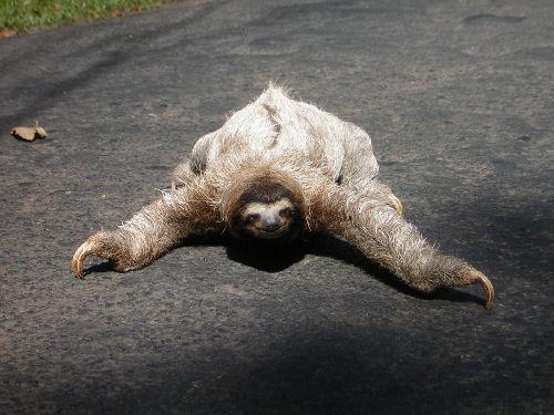 sloth1-jpg