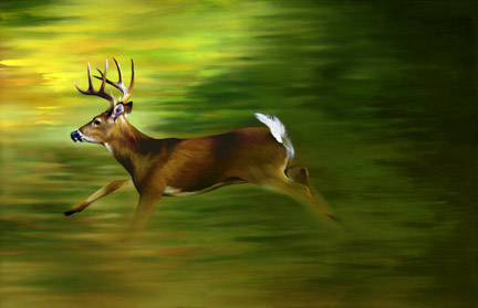small_running_deer_copy-jpg