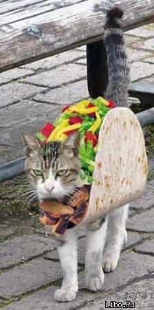 taco-cat-jpg