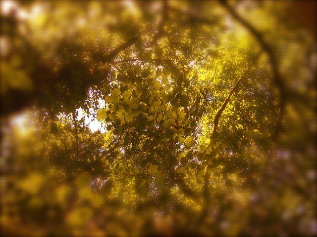 tree-jpg