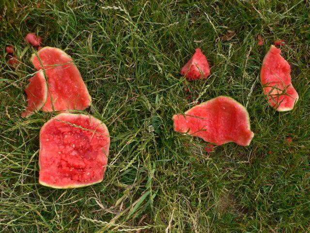 watermelon-jpg
