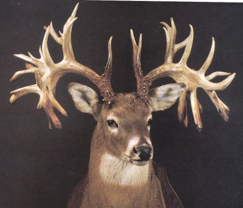 world-record-missouri-buck-04-jpg