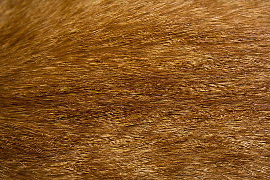 work-6911545-1-flat_550x550_075_f-the-cat-fur-jpg