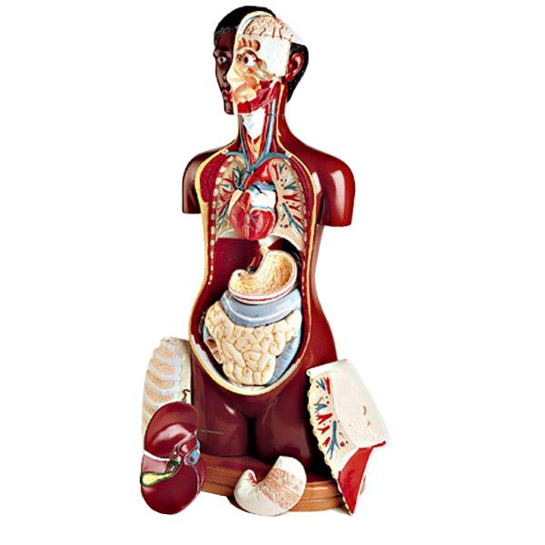 black-torso-human-anatomy-model.jpg