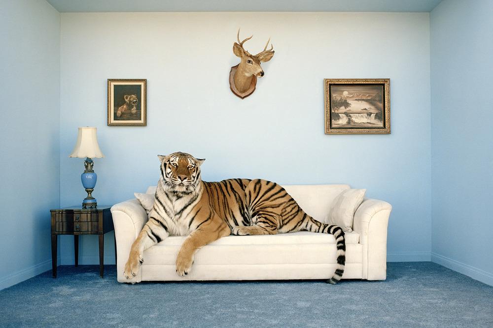 tiger-in-room.jpg