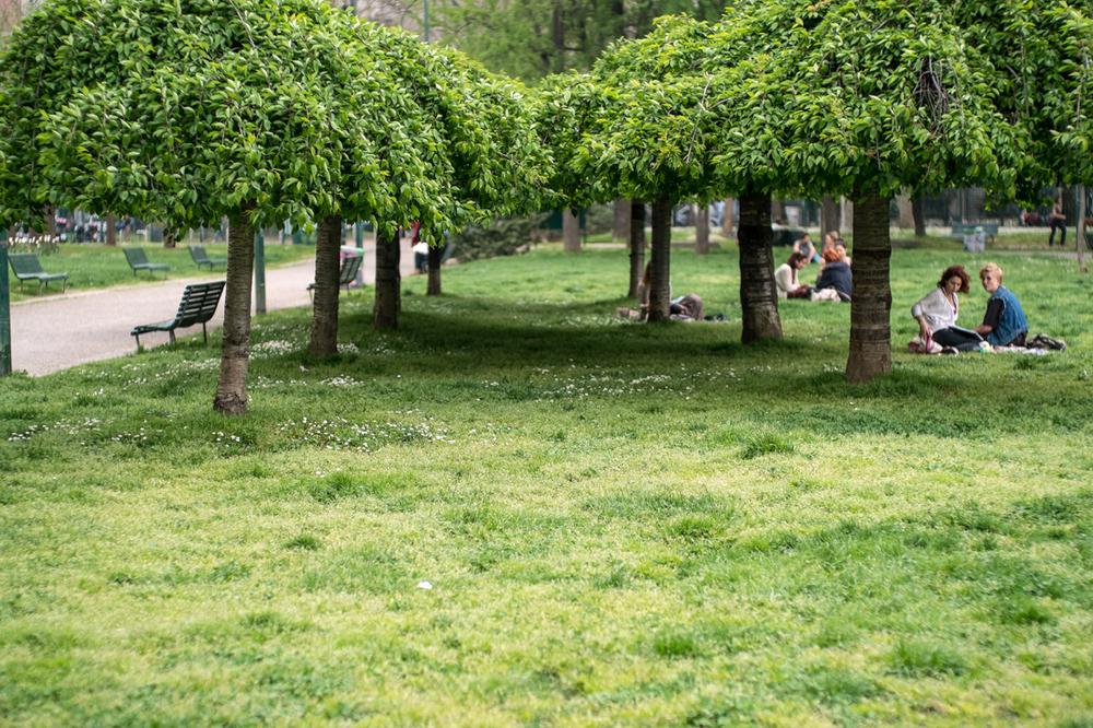 UnderTrees.jpg