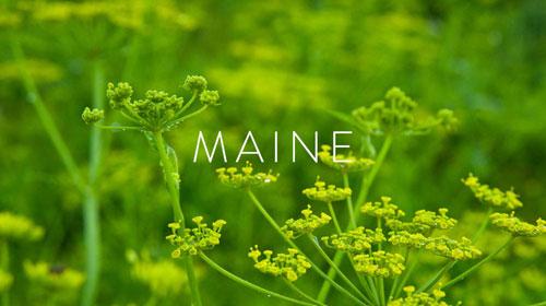 Maine-Title.jpg