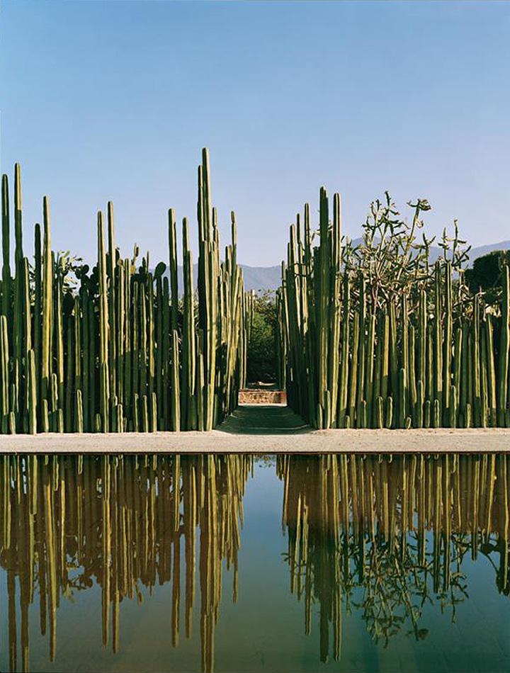 Garden - Oaxaca.jpg