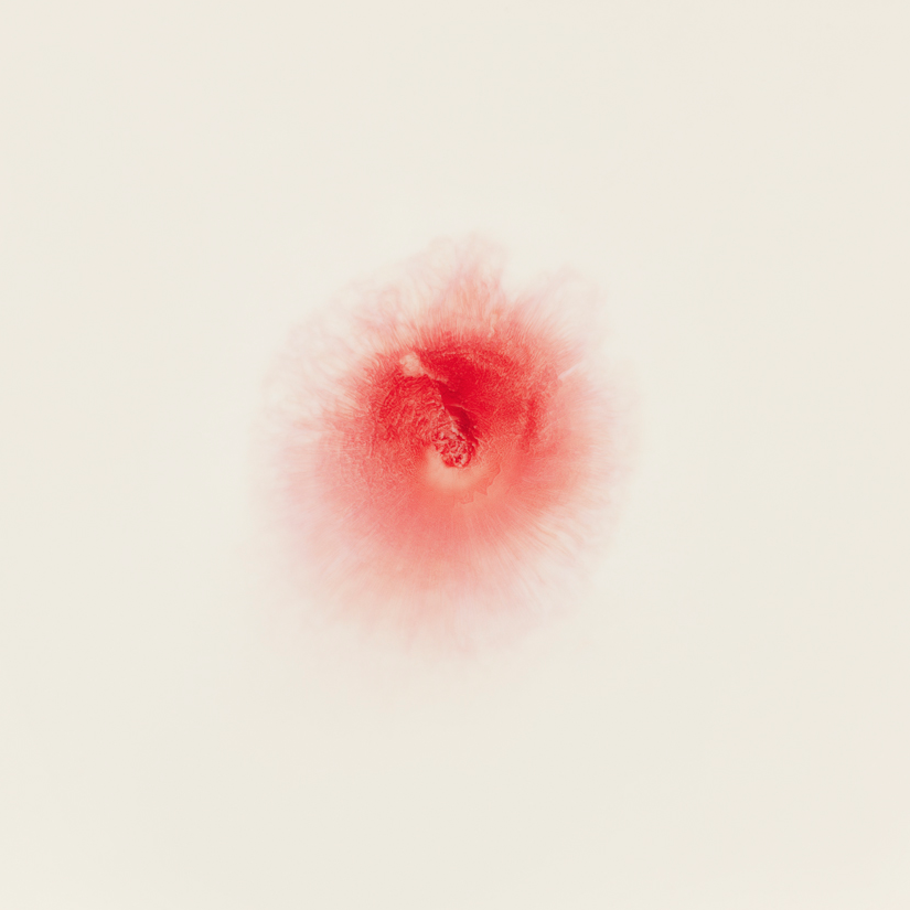 Love Me Love Me Not, Untitled 4, 2013 - Ori Gerscht.png