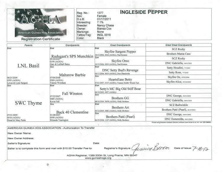 Pepper Pedigree.jpg