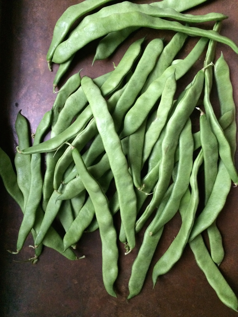 Northeaster pole beans