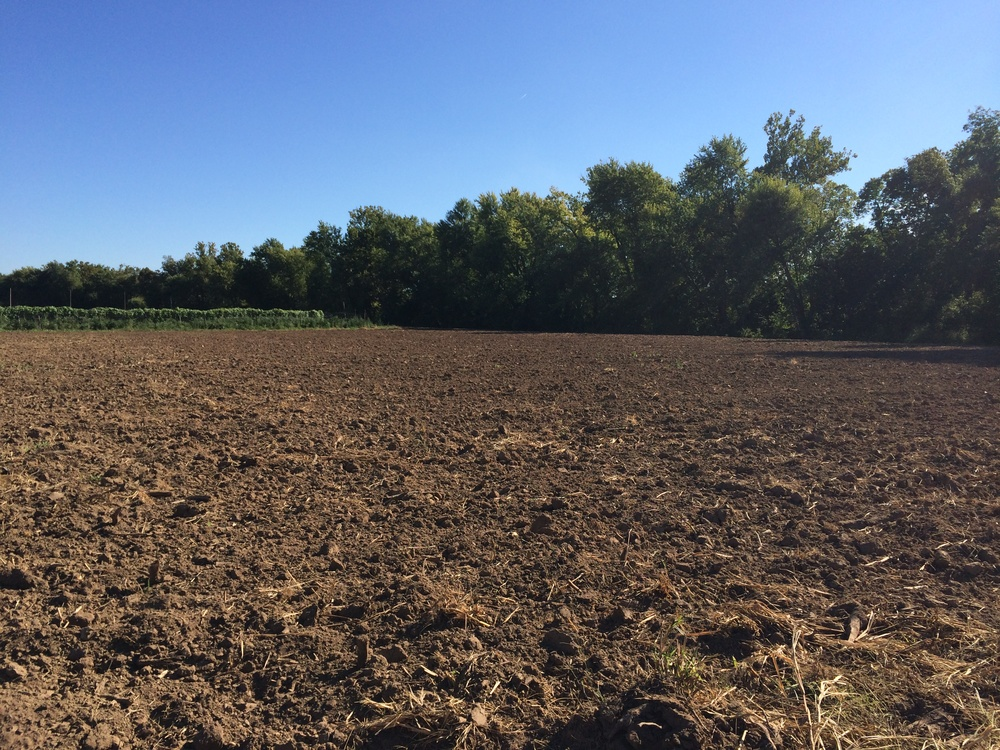 This beautiful soil is just waiting to be planted with a cover crop of winter radish and clover