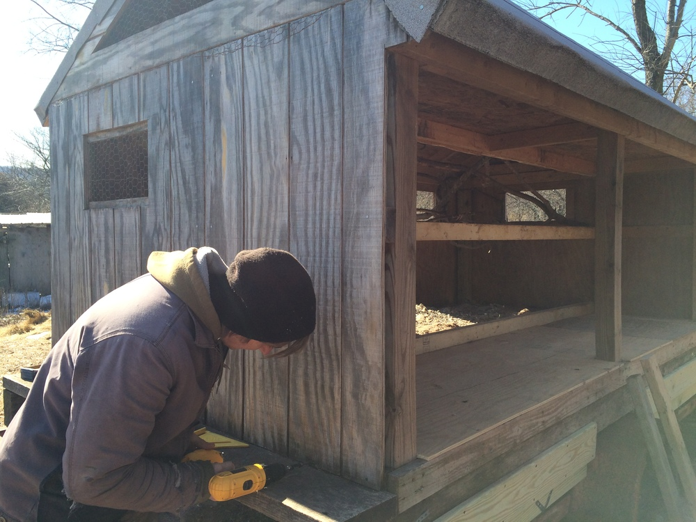Chris, putting in some fresh screws to ensure the new(ish) hen house is nice and sturdy