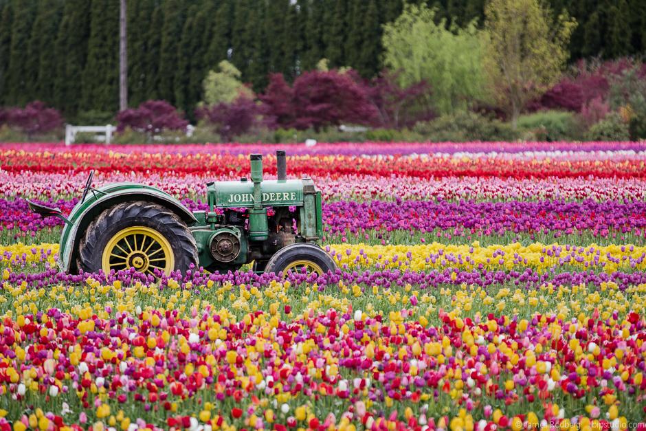 Tulip-Festival_0315-E.jpg