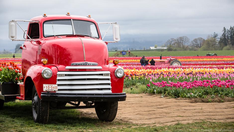 Tulip-Festival_0416.jpg