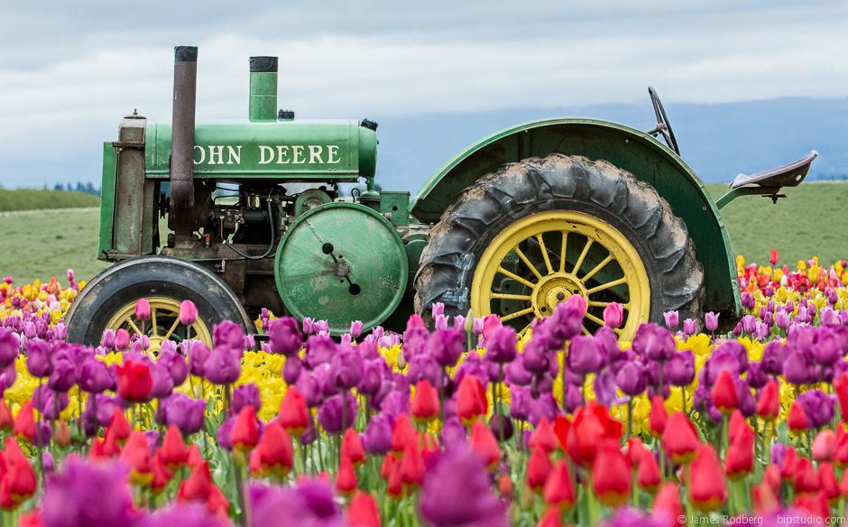 Tulip-Festival_0356-E.jpg