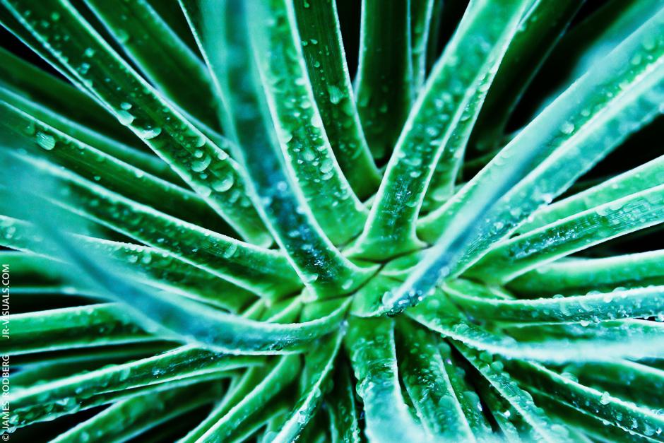 plant-close-up_2091_3