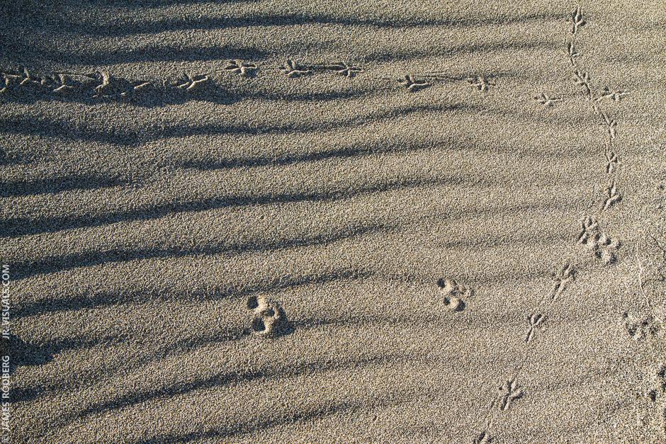 sand-trails_2008