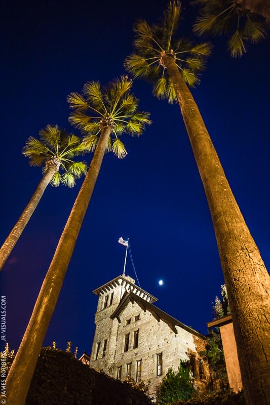 palm-tree-night-winery_0090