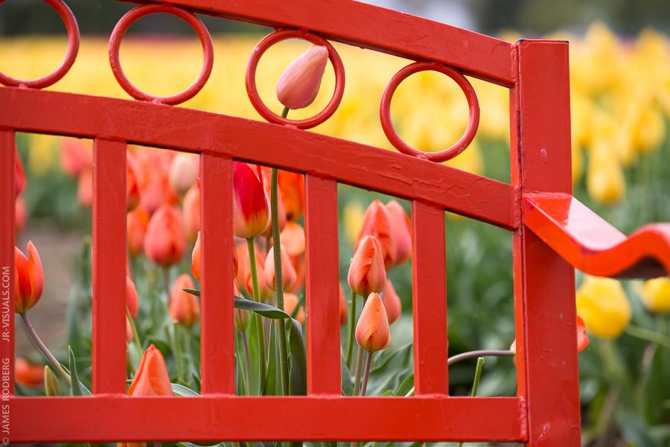 tulip-bench_0430